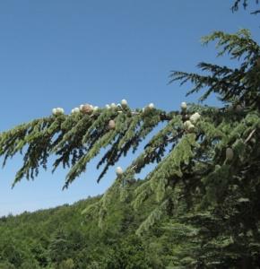 Babadağ Florası